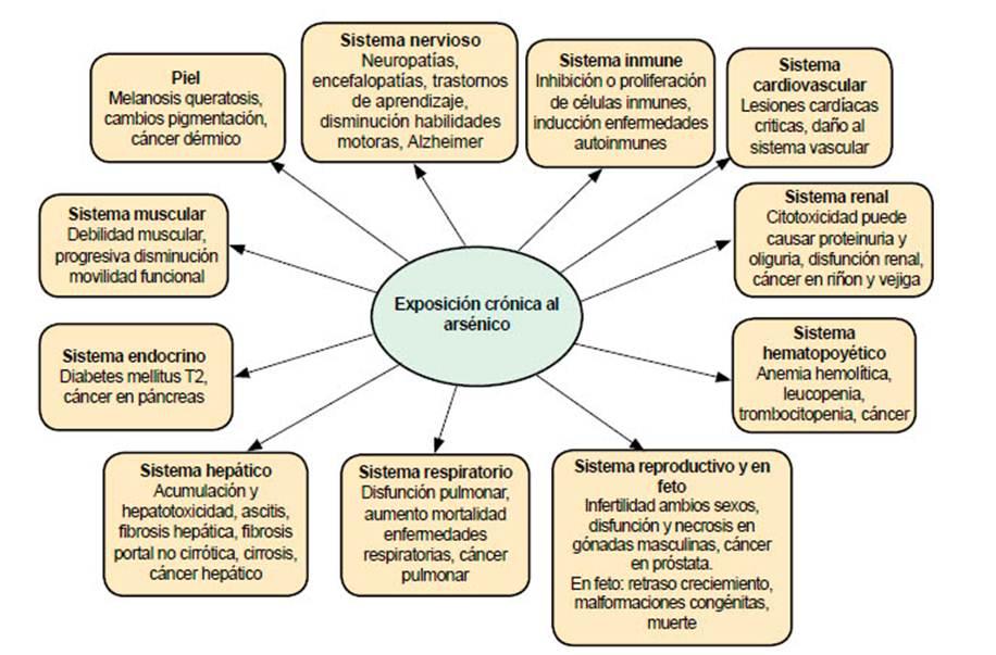 Saúde Pública - Ingesta de arsénico: el impacto en la alimentación y ...